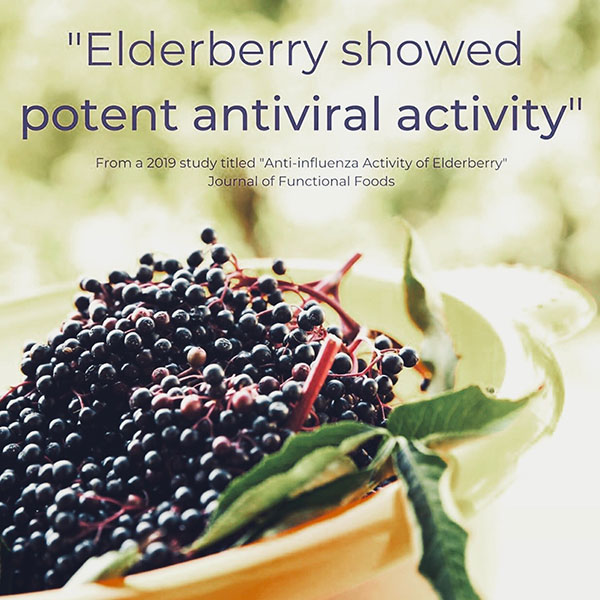 benefits of elderberry graphic